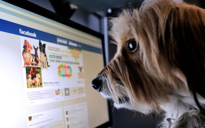 Suc manh cua nut share Facebook hinh anh 1