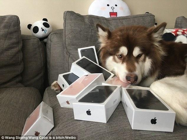 Thieu gia Trung Quoc mua 8 chiec iPhone 7 cho cho cung hinh anh