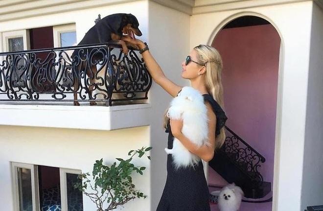 Paris Hilton biet thu xa hoa danh cho cho anh 1