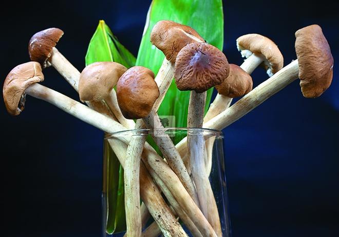 Nấm Cây Trà có công dụng làm đẹp da và chống lão hóa.