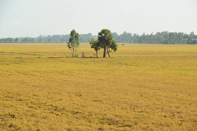 Sau đó, đoàn chạy thẳng xuống Tân Châu và Châu Đốc. Đường đi từ Châu Đốc tới Tịnh Biên mới và đẹp với cánh đồng lúa chín bạt ngàn.