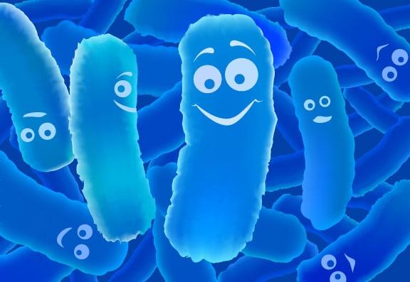 Ly do viem dai trang kho chua dut diem hinh anh 3 Lợi khuẩn bifido – chiến binh đắc lực cho người bệnh viêm đại tràng mãn tính.