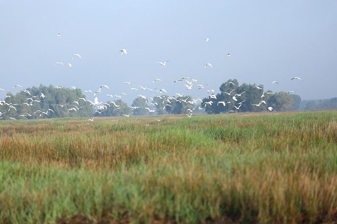 Vuon quoc gia Tram Chim dang hoi sinh an tuong hinh anh 1 Với diện tích hơn 7.313 ha, 231 loài chim, 130 loài cá và hệ sinh thái đa dạng, Tràm Chim là khu Ramsar có vai trò quan trọng trong bản đồ đa dạng sinh học thế giới.