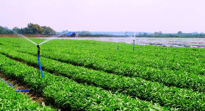 Me rau sach dau tien cua VinEco den tay nguoi tieu dung hinh anh 1 Rau an toàn của VinEco được sản xuất theo công nghệ cơ giới hóa và tự động hóa trên cánh đồng mẫu lớn của Nhật Bản trên các nông trường tại Tam Đảo (Vĩnh Phúc), Củ Chi (TP HCM) và Long Thành (Đồng Nai).