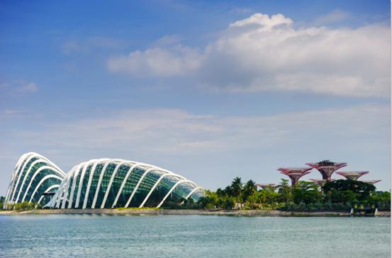 Singapore: Thoa long uoc mo tuoi tre hinh anh 3