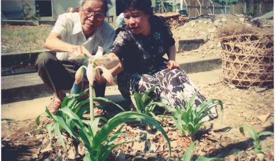 Cay trinh nu hoang cung Viet Nam co the dieu tri khoi u hinh anh 2
