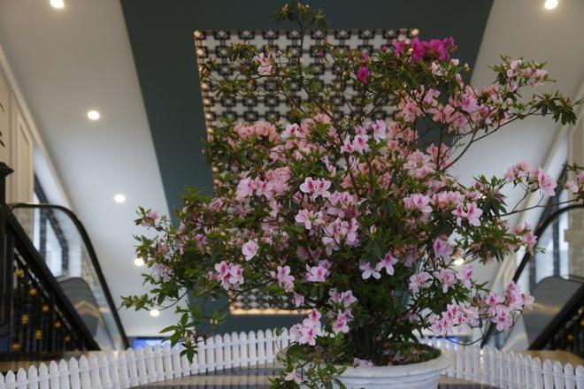 Muon hoa khoe sac tai Le hoi hoa do quyen Fansipan Legend hinh anh 2