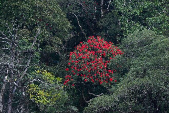 Muon hoa khoe sac tai Le hoi hoa do quyen Fansipan Legend hinh anh 4
