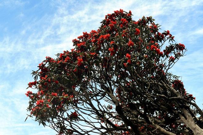 Muon hoa khoe sac tai Le hoi hoa do quyen Fansipan Legend hinh anh 6