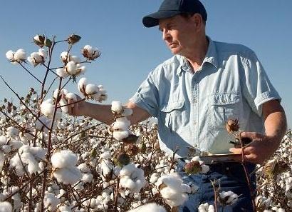 Cotton USA - chat lieu moi trong thoi trang do lot hinh anh
