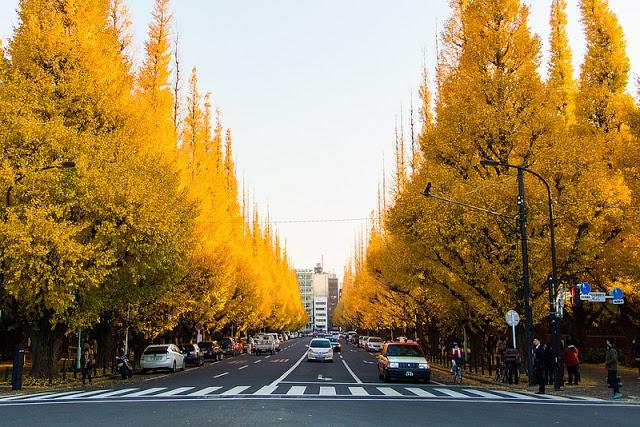 Mua thu dep den nao long o Tokyo hinh anh