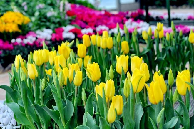 Lac loi giua nghin hoa tuy-lip tai Vinpearl Land Nha Trang hinh anh