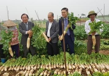 DN Viet - Han bat tay xay dung nha may che bien cu cai tai Hai Duong hinh anh