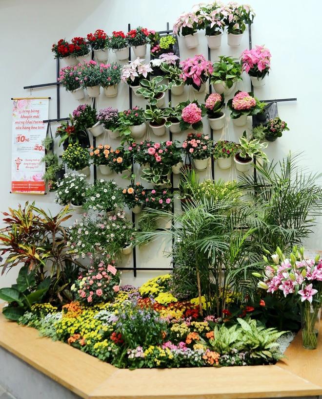 Dalat Hasfarm khai truong cua hang hoa tuoi dau tien o Binh Duong hinh anh 4