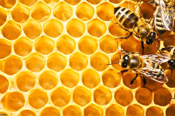 Tac dung cua keo ong voi nguoi mac benh phoi tac nghen man tinh hinh anh