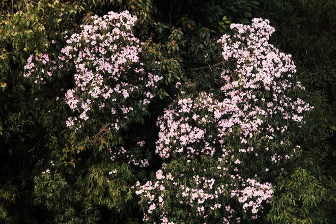 Kham pha vuong quoc hoa do quyen tai Fansipan hinh anh 3