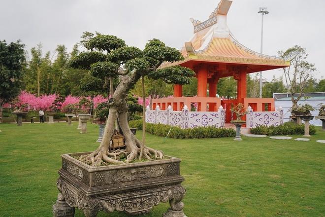 Lac toi xu phu tang tai hoi hoa xuan phia tay Ha Noi hinh anh 2 2_5.jpg