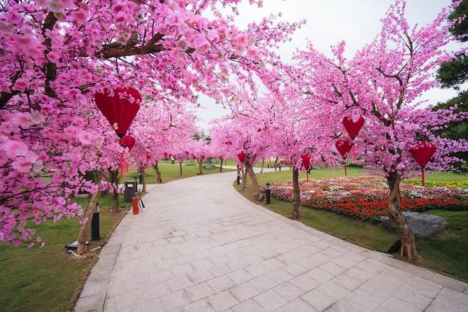 Lac toi xu phu tang tai hoi hoa xuan phia tay Ha Noi hinh anh 3 3_2.jpg