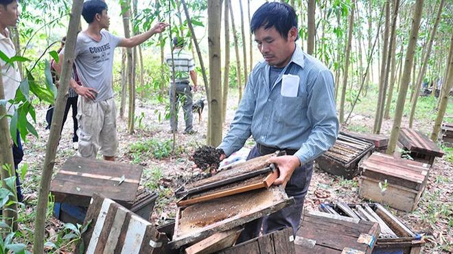 Ông Nguyễn Trọng Tính bên số ong bị người dân tấn công xịt thuốc chết.