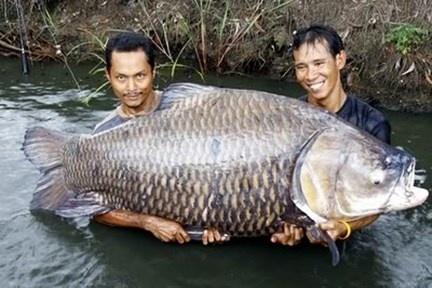 Ky Cong San Loai Ca 'Khon Ba Nam, Dai Mot Gio' Hinh Anh