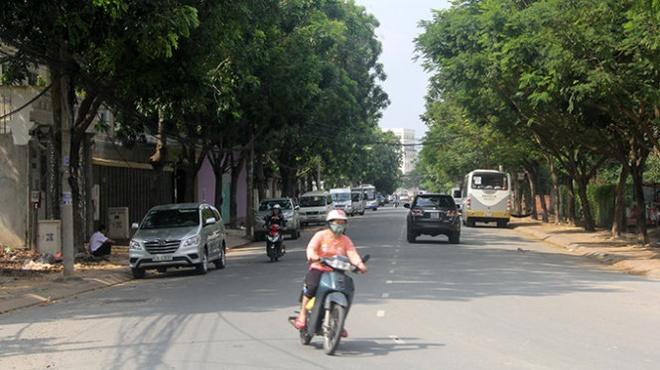 Se don hon 200 cay xanh tai TP.HCM hinh anh 1 Hàng cây xanh trên đường Nguyễn Văn Hưởng, P.Thảo Điền, Q.2 (TP.HCM) dự kiến phải đốn bỏ để mở rộng đường
