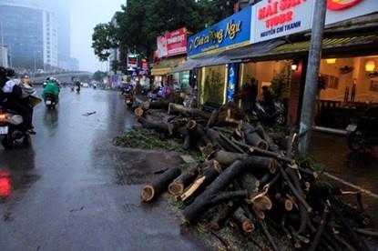'Chat cay xanh Ha Noi khong phai hoi dan' hinh anh 2 Cây xanh bị chặt hạ trên đường Nguyễn Chí Thanh. Ảnh: Dân Việt.