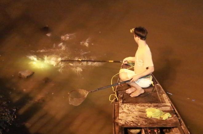 Cach nao bao ve ca kenh Nhieu Loc? hinh anh 2 Một đàn cá nhảy và nổi lên mặt nước khi bị điện chích vào.