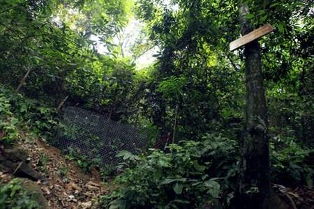 Le hoi Den Hung: Chang luoi B40 de chong di tat hinh anh 2 tránh tình trạng người dân lên Đền Thượng bằng lối tắt, BTC đã bố trí vây những lối lên này bằng lưới B40.