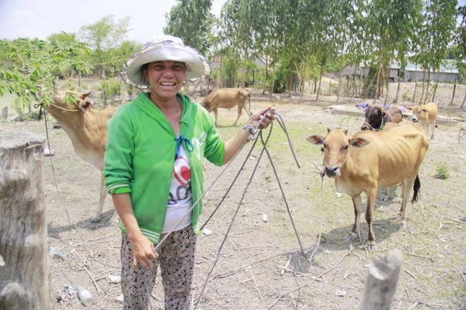 """Bi hai chuyen... 'bat chong' hinh anh 1 Đàn bò vừa mới """"phạt"""" được của nhà trai tại nhà H'Duong."""