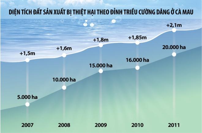 Mien Tay 'chay bien', 'chay song' hinh anh 2 Diện tích đất sản xuất bị thiệt hại theo đỉnh triều cường dâng ở Cà Mau.
