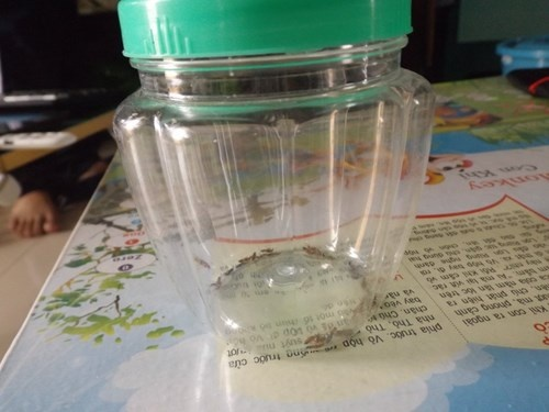 Lo loet vi bi kien ba khoang lien tuc tan cong hinh anh 2 nhiều kiến ba khoang nhốt trong hộp.
