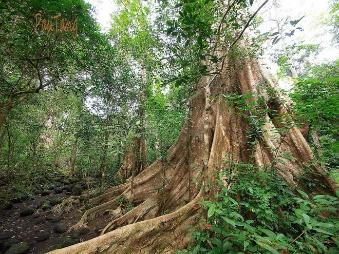Dong Nai phan doi du an 18 km duong xuyen rung Cat Tien hinh anh 1 Một góc rừng Nam Cát Tiên.