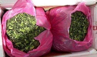 Phat hien 2,7 tan nghi la Khat trong container tai Hai Phong hinh anh 1