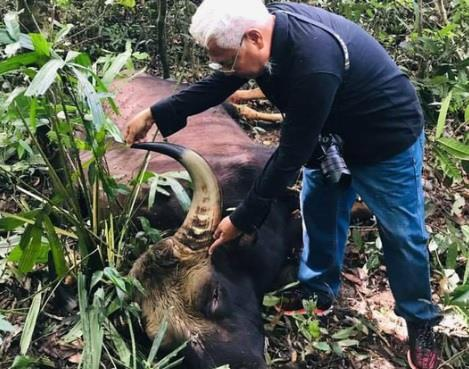 Lai phat hien xac bo tot nang khoang 800 kg trong khu bao ton hinh anh 1