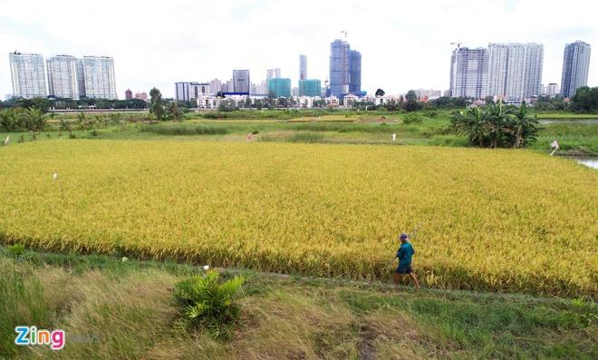 Người dân 11 quận, huyện ở Sài Gòn được chuyển 1.017 ha đất trồng lúa