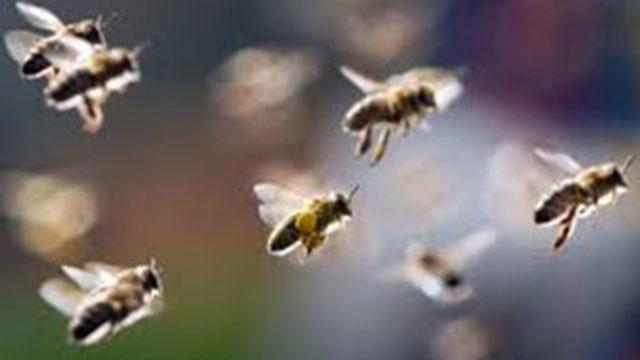 Tran dau o Ecuador bi tam hoan vi dan ong tan cong hinh anh