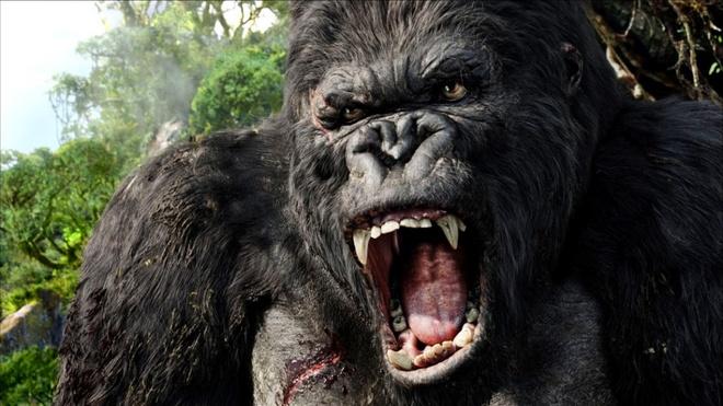 Phim 'King Kong' phan 2 chuan bi quay tai Viet Nam hinh anh