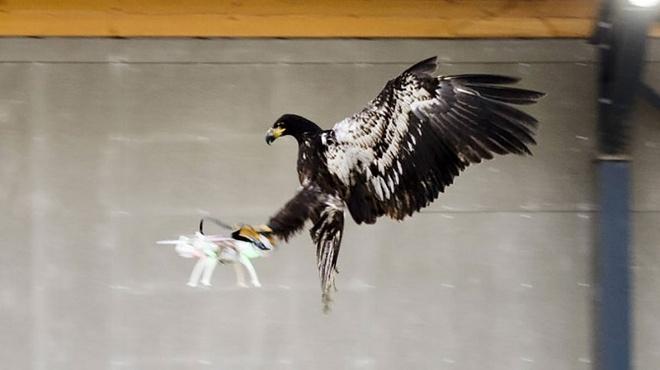 Ha Lan huan luyen dai bang de 'diet' drone hinh anh 1