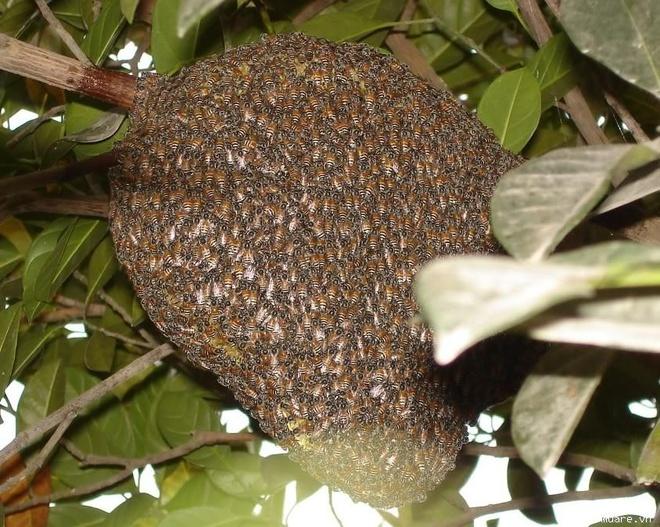 Bi ong dot chet khi di phat ray hinh anh