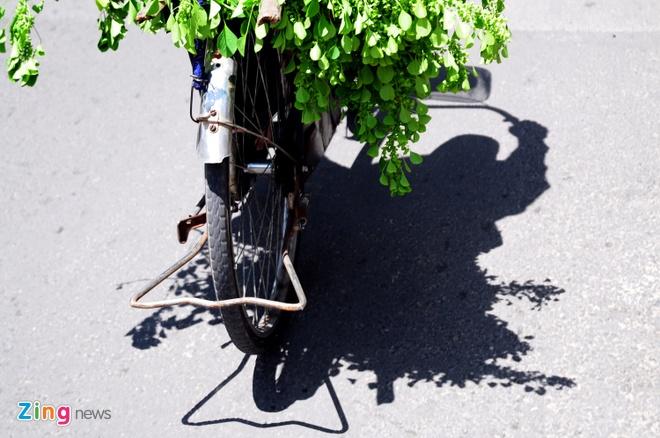 """Cu ba ban ve so hai la thuoc cuu nguoi hinh anh 7 Trời nắng nóng, bà vẫn đạp xe đều đặn trên các con đường để tìm cây thuốc. Bà tâm sự: """"Bà có chiếc xe đạp mới được từ thiện tặng, nhưng bà để dành, chỉ dám đi chiếc xe đạp cũ vì sợ mất""""."""