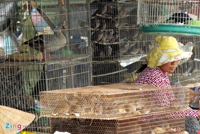 Cho chim troi 20.000 dong/con o cua ngo Sai Gon hinh anh 12 Chợ chim trời này hoạt động công khai giữa thanh thiên bạch nhật dù họ có bán cả những loài chim cấm khai thác, bẫy bắt trong tự nhiên. Người mua, kẻ bán đều hỉ hả trong tiếng kêu yếu ớt, thê thiết của bầy chim hiền lành bị treo ngược trước quán.