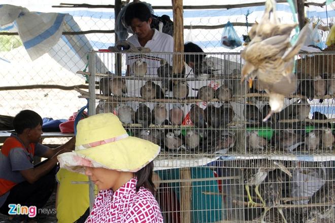 Cho chim troi 20.000 dong/con o cua ngo Sai Gon hinh anh 2 Vào mùa nước nổi cùng là mùa sinh sôi nảy nở của các loại chim như cu đất, cu gáy, le le, cò, vạc, điêng điểng, đến các loại chim nhỏ như ri, sẻ, dồng dộc, sáo… người dân sẽ đi đặt bẫy bắt và bán lại cho các lái.
