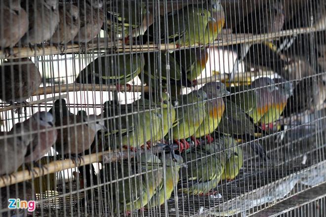 Cho chim troi 20.000 dong/con o cua ngo Sai Gon hinh anh 4 Cu gáy, cu đất là loại được ưa thích nhất, nên hầu như gian hàng nào cũng có, số lượng đến hàng trăm con.