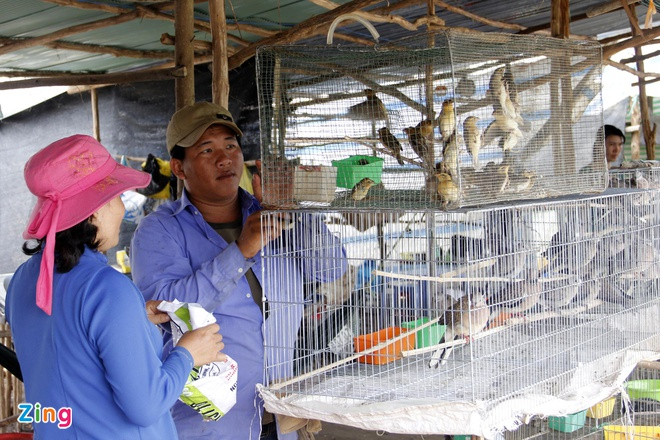 Cho chim troi 20.000 dong/con o cua ngo Sai Gon hinh anh 10 Gia đình nhà anh Thanh lại chuyên bán các loại chim để làm cảnh, nhiều nhất là chim dồng dộc, hồng yến, yến phụng, sáo đất  và cu đất loại đã biết gáy.