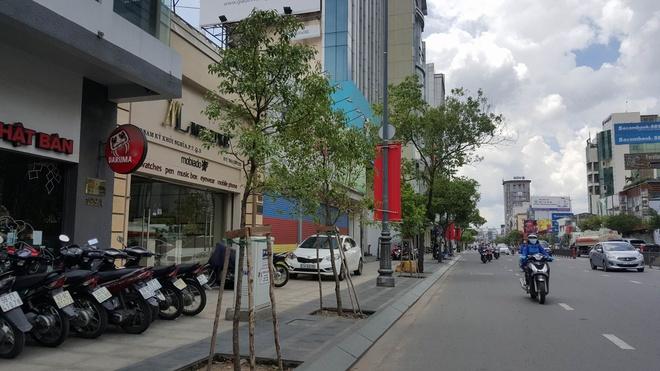 TP.HCM thay cay long nao tren tuyen duong vao Tan Son Nhat hinh anh 1