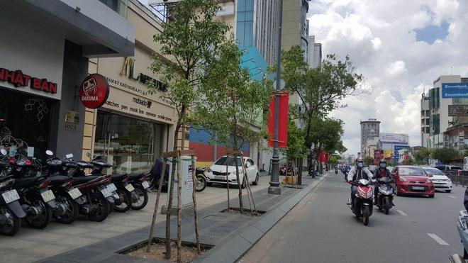 TP.HCM thay cay long nao tren tuyen duong vao Tan Son Nhat hinh anh
