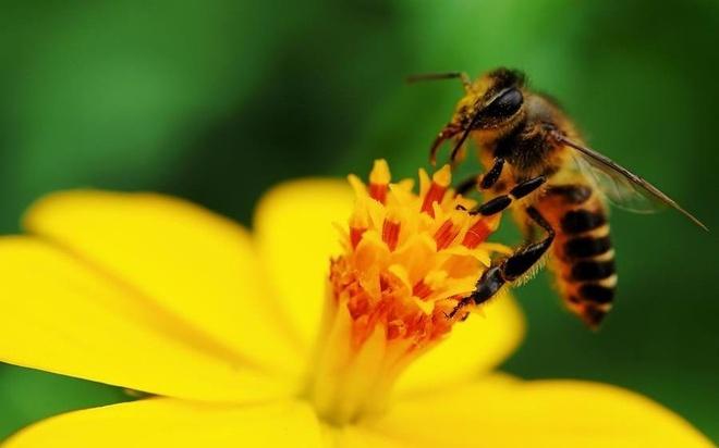 Cau do tinh so ong va hoa qua hai goi y hinh anh