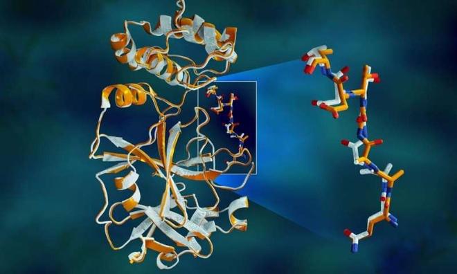 giai phau SARS-CoV-2 anh 1