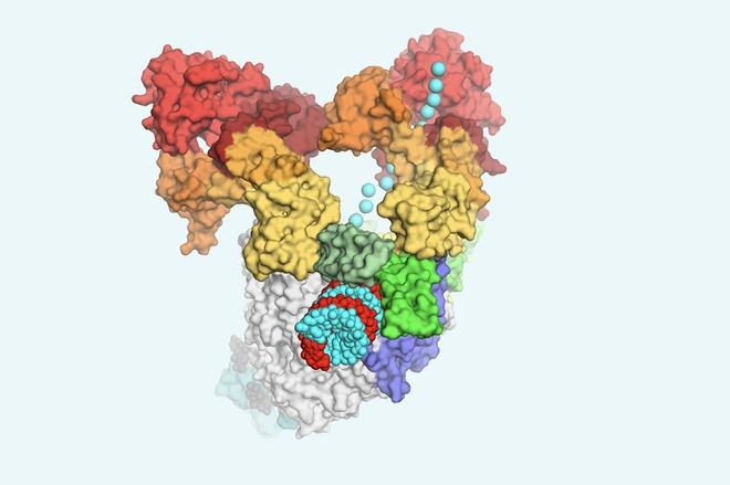 Virus SARS-CoV-2 anh 1
