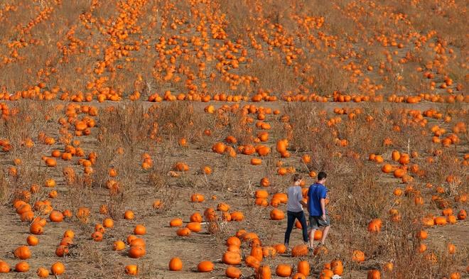 Bi ngo Halloween, mo Chua vao top anh an tuong cuoi thang 10 hinh anh